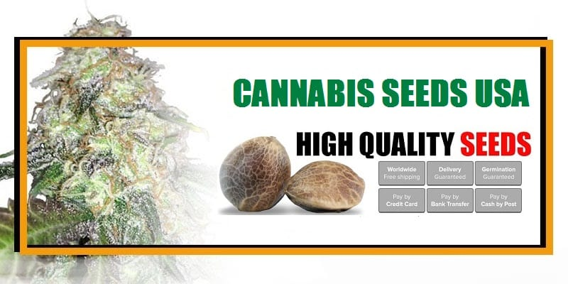 Buy USA Cannabis Seeds Online