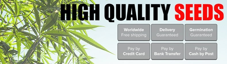 Best Marijuana Seeds To USA By Mail