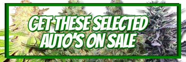 420 Sale Autoflowering Seeds