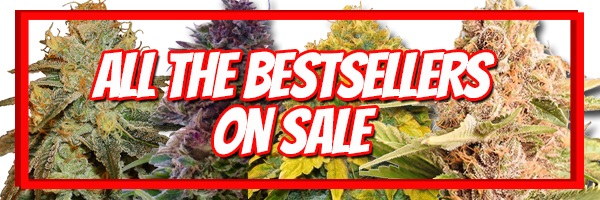 420 Sale Best Selling Cannabis Seeds - Buy 10 Get 10 Free