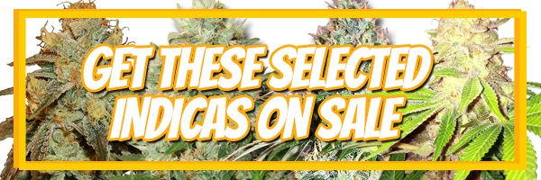 420 Sale Indica Cannabis Seeds - Buy 10 Get 10 Free