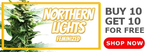 420 Sale Northern Lights Feminized Seeds