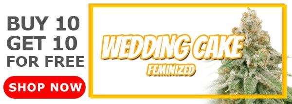 420 Sale Wedding Cake Feminized Seeds