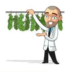 Benefits of Growing Autoflowering Plants Indoors