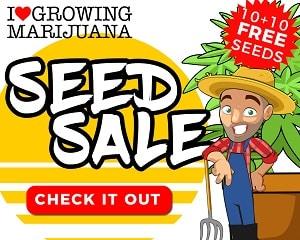 Buy ILGM Marijuana Seeds Online