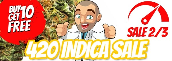 Free Indica Cannabis Seeds 420