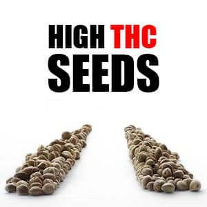 High THC Marijuana Seeds