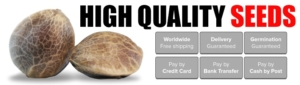 Trusted Seedbank To Buy Marijuana Seeds