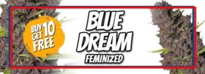 Blue Dream Seeds Memorial Day Sale