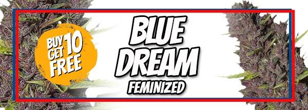 Blue Dream Seeds Memorial Day Sale