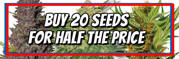 Buy Cannabis Seeds For Extreme Climates Online