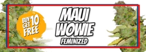 Maui Wowie Seeds Memorial Day Sale