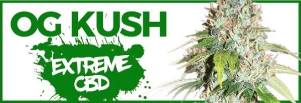 Buy OG Kush Seeds