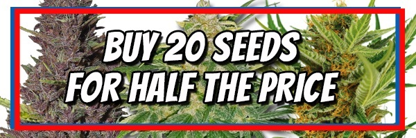 Get Free Marijuana Seeds In The June Sale