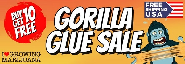 Gorilla Glue Sale