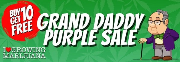 Grand Daddy Purple Sale