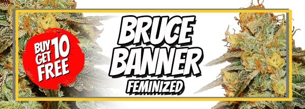 710 Sale Free Bruce Banner Seeds