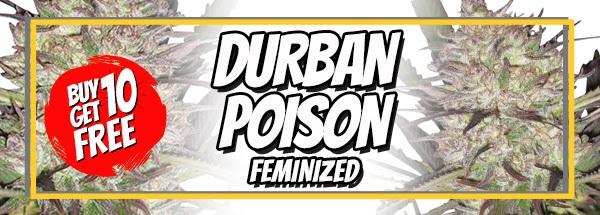 710 Sale Free Durban Poison Seeds