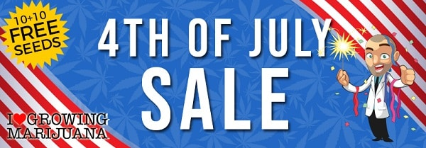 Marijuana Seeds 4th July Sale