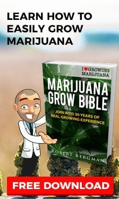 Grow Marijuana From Your Favourite Seed Bank