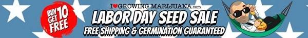 Labor Day Marijuana Seeds Sale