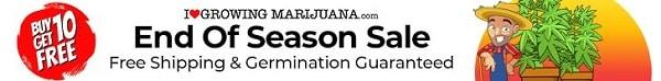 Free Marijuana Seeds - End Of Season Sale