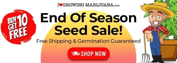 ILGM Seed Bank End Of Season Sale
