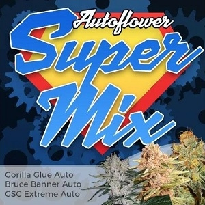 Autoflower Super Seeds Mix