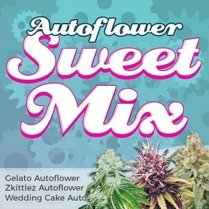 Autoflower Sweet Seeds Mix