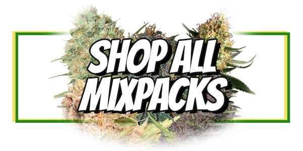 Cheap Marijuana Seeds With Free Shipping