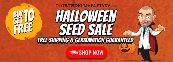 Halloween Buy 10 Get 10 Free Marijuana Seeds Offer