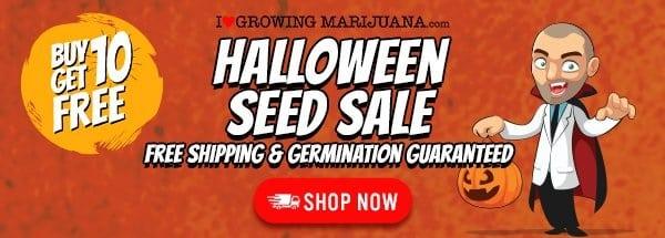 Halloween Buy 10 Get 10 Free Marijuana Seeds Offer