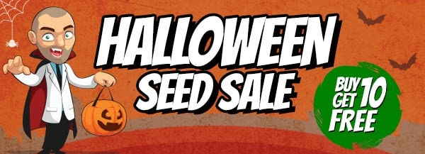 Halloween Marijuana Seeds Sale