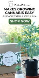 Buy A Pot For Pot Grow Set