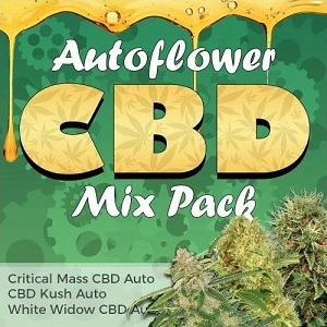 Autoflower CBD Seeds Mix