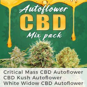 Autoflower CBD Seeds Mix