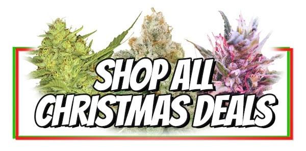 Christmas Buy 10 Get 10 Free Marijuana Seeds Offer
