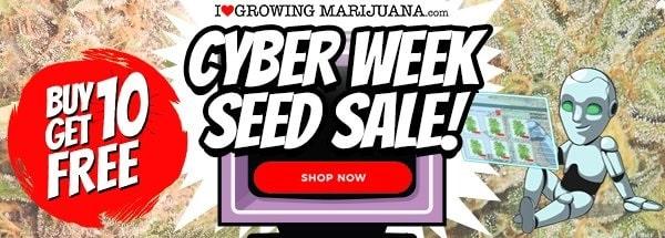 Cyber Week Buy 10 Get 10 Free Marijuana Seeds