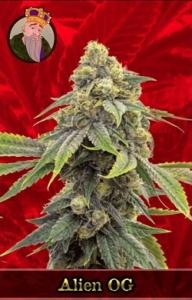 Alien OG Marijuana Seeds
