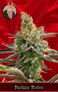 Badazz Rolex Marijuana Seeds