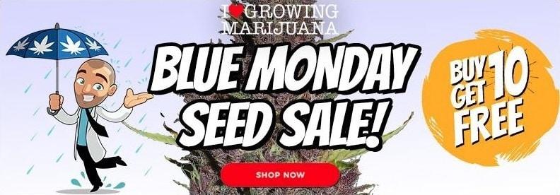 Blue Monday Buy 10 Get 10 Free Sativa Seeds Offer