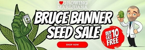 Bruce Banner Cannabis Seeds Sale
