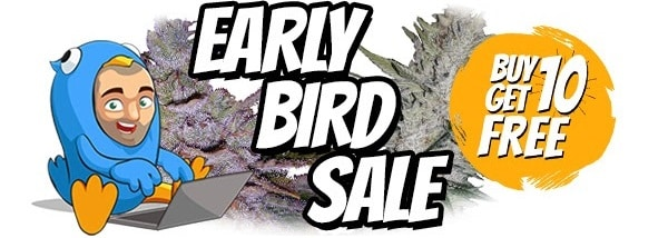 Free Marijuana Seeds Early Bird Sale