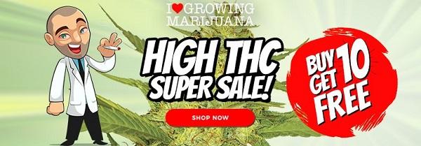 Cheap High THC Cannabis Seeds Sale