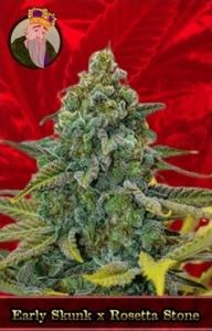 Early Skunk x Rosetta Stone Marijuana Seeds