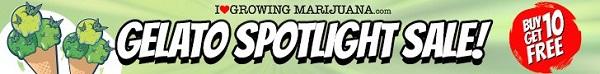 Free Marijuana Seeds Gelato