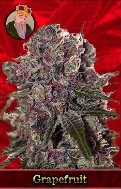 Grapefruit Marijuana Seeds