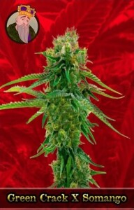 Green Crack x Somango Marijuana Seeds
