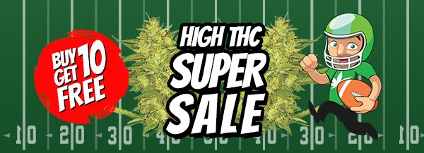 High THC Marijuana Seeds Sale