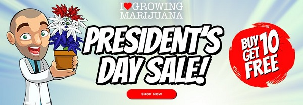Presidents Day Offer - Buy 10 Get 10 Free Cannabis Seeds